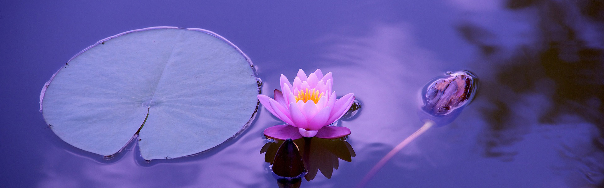 L'équilibre subtil de la relation corps, esprit, émotions