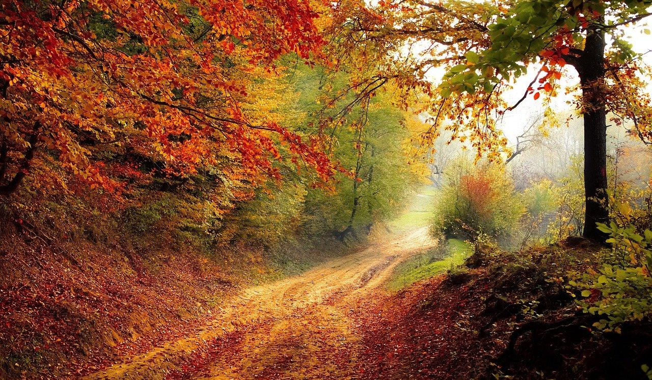 Re flexologie d automne