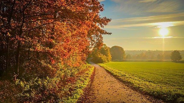 Route de campagne en automne